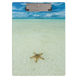 Sea star in shallow water, Palau Clipboards