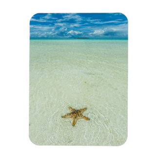 Sea star in shallow water, Palau Magnet