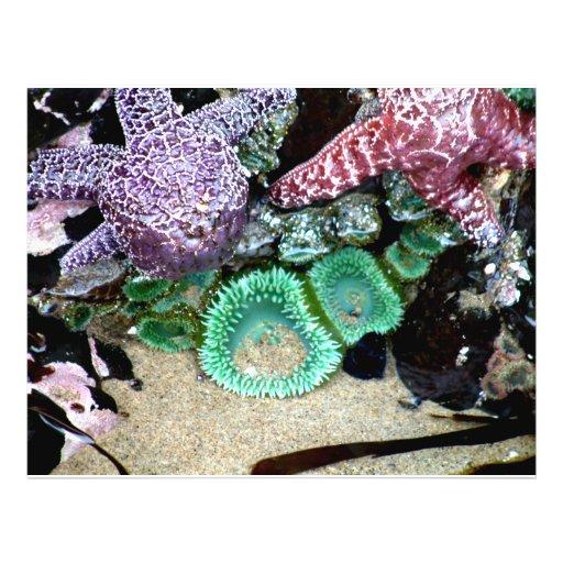 Sea Stars Anemones Flyers