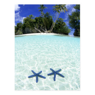 Sea stars, Rock Islands, Palau Postcard