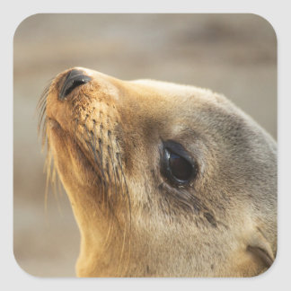 Sea that lion of a face square sticker