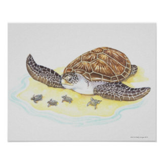 Sea Turtle and Babies Poster