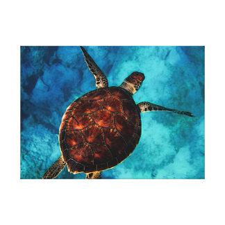 Sea Turtle Beauty Canvas Print