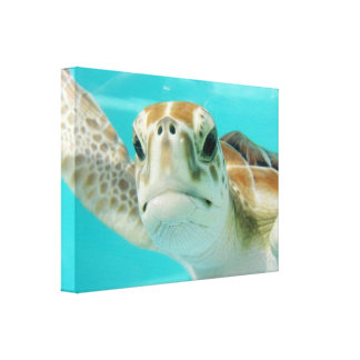 Sea Turtle in Mexican Waters Canvas Wrapped Print