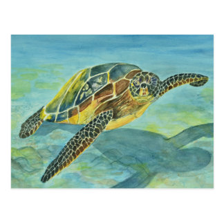 Sea Turtle Postcard