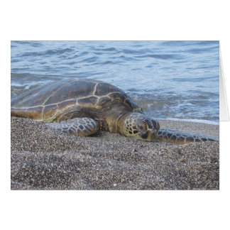 Sea Turtle Resting in Hawaii Card