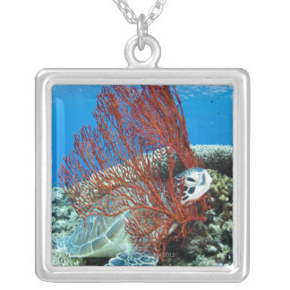 Sea turtle resting underwater 2 silver plated necklace