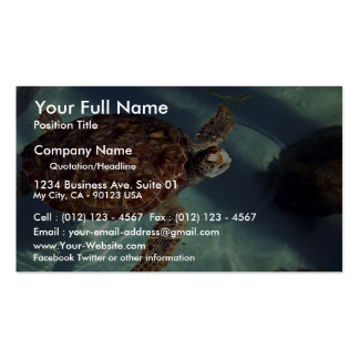 Sea turtle surfaces pack of standard business cards