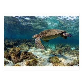 Sea turtle swimming in lagoon paradise island postcard