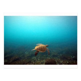 Sea turtle swimming underwater Galapagos paradise Postcard