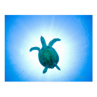 Sea turtle swimming underwater postcard