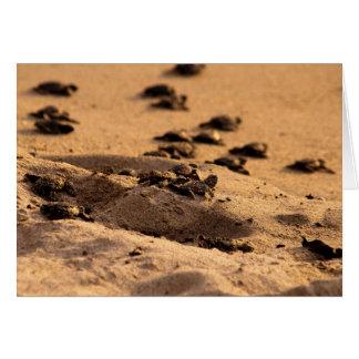 Sea Turtles Card