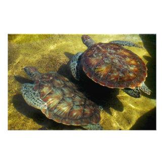 Sea Turtles Customised Stationery