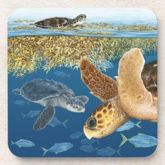 Sea Turtles in Habitat Coasters