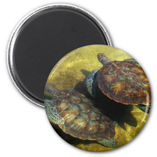 Sea Turtles Magnet