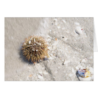 Sea Urchin in the Surf Card