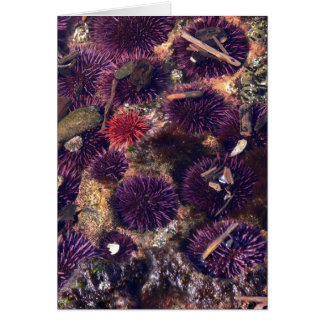 Sea Urchins Card