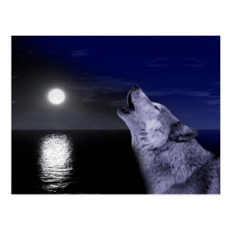 Sea wolf - moon wolf - full moon - wild wolf postcard
