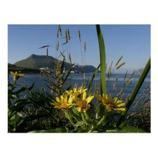 Seabeach Senecio, Unalaska Island Postcard