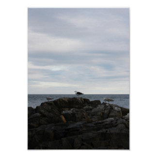 Seabrook Gulls Poster
