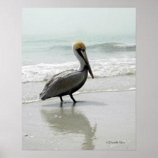 SeaFog Pelican Poster