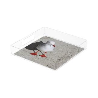 Seagull Acrylic Tray