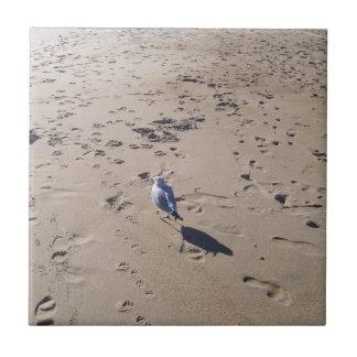 Seagull at Sandbridge VA Tile