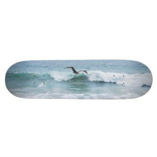 Seagull at the Beach in California 19.7 Cm Skateboard Deck