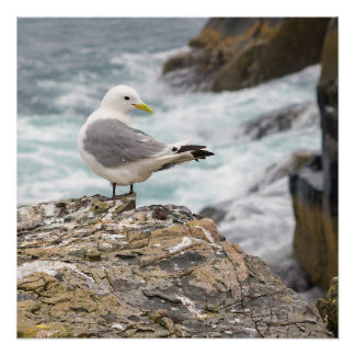 Seagull at The Farne Islands cliffs poster