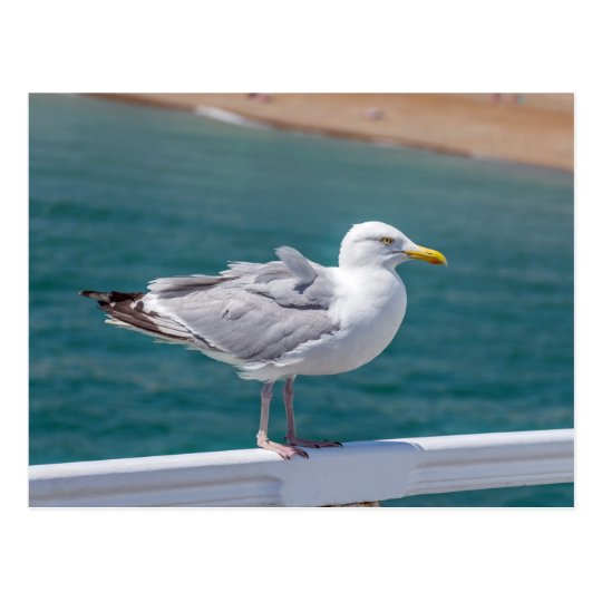 Seagull at the seaside postcard