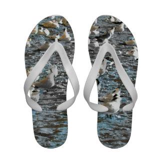 seagull beach birds painted blue theme florida flip flops