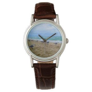 Seagull Beach Watch