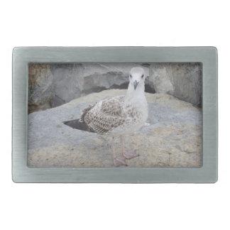 Seagull Belt Buckle