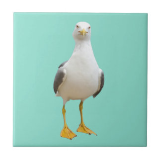 Seagull Bird on Teal Tile