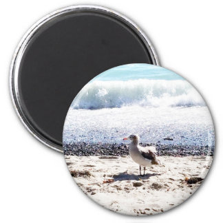 seagull by the ocean on the beach picture magnet