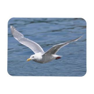 Seagull Cruising over Water Magnet