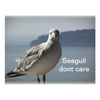 Seagull don`t care postcard