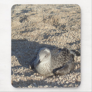 Seagull Enjoying The Sun Summer Photography Mouse Pad
