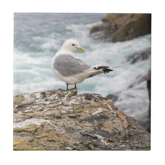 Seagull Farne Islands cliffs small square tile