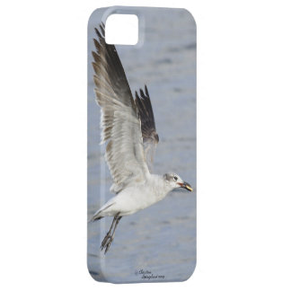 Seagull flying with food in mouth iPhone Case iPhone 5 Cover