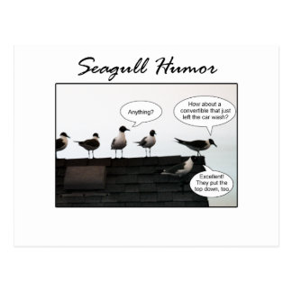 Seagull Humor Post Cards