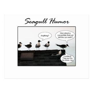 Seagull Humor Postcard