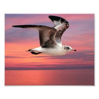 Seagull in beautiful flight photo print