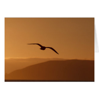 Seagull late afternoon greeting card