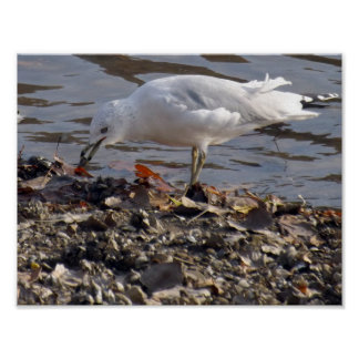 Seagull Lunch Poster