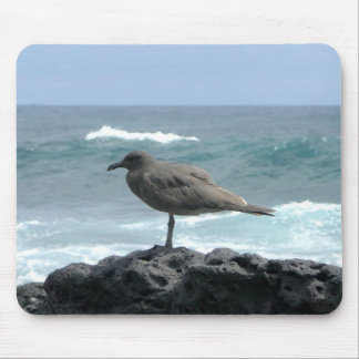 seagull of the Galapagos Mouse Pad
