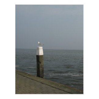 Seagull on a Wooden Pole at Sea Photo Postcard