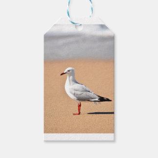 SEAGULL ON BEACH QUEENSLAND AUSTRALIA