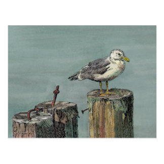 SEAGULL on PILING by SHARON SHARPE Postcard