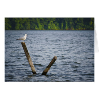 Seagull on Post Greeting Card. Card